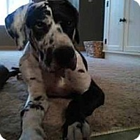 Adopt A Pet :: Baby - Inver Grove Heights, MN