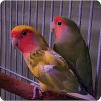 Adopt A Pet :: Tammy & Tutti - Redlands, CA