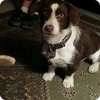 Adopt A Pet :: Sadie - Buchanan Dam, TX