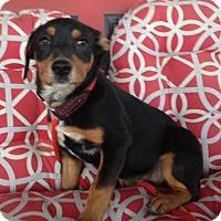 Adopt A Pet :: Ethel - Memphis, TN