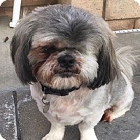 Adopt A Pet :: BLAKE - Mission Viejo, CA