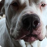 Adopt A Pet :: Blanca - Norwood, GA