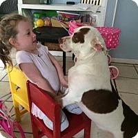Adopt A Pet :: Benny Hana - Albertville, MN