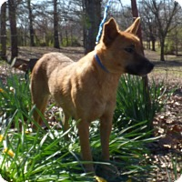 Adopt A Pet :: Trinket - Bedminster, NJ