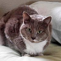 Adopt A Pet :: Puffin - Palo Cedro, CA