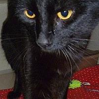 Adopt A Pet :: Wendell - Hamburg, NY