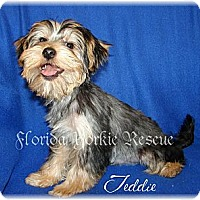 Adopt A Pet :: Teddie - Palm City, FL