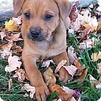 Adopt A Pet :: Bop - Chattanooga, TN