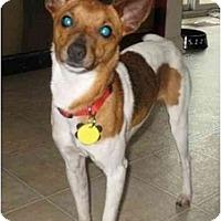 Adopt A Pet :: Sawyer - Albany, NY