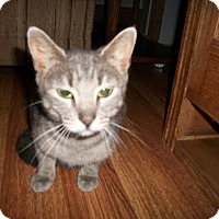 Adopt A Pet :: Tally - Leamington, ON