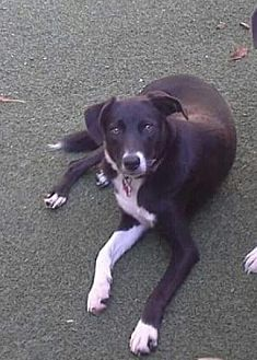 Border Collie Mix Dog for adoption in Evansville, Indiana - Noah