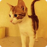 Adopt A Pet :: Tanner - Delmont, PA