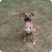 Adopt A Pet :: Cinnamon - Gadsden, AL