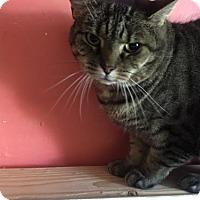 Adopt A Pet :: Lilly - Washington, VA
