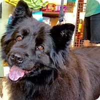 Adopt A Pet :: Willie - Los Angeles, CA