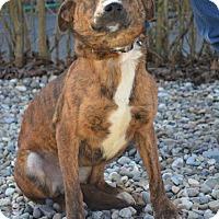 Adopt A Pet :: Jina - Danbury, CT