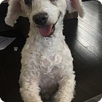 Adopt A Pet :: Madison - Los Angeles, CA