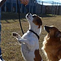 Adopt A Pet :: LULU - East Windsor, CT