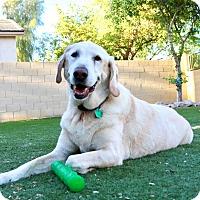 Adopt A Pet :: Dominic - Litchfield Park, AZ