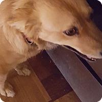 Adopt A Pet :: Sissy - Tucson, AZ