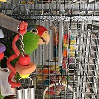 Adopt A Pet :: Roti - Punta Gorda, FL