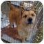 Photo 2 - Terrier (Unknown Type, Medium)/Corgi Mix Dog for adoption in Fowler, California - Baxter