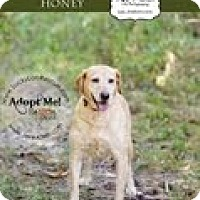 Adopt A Pet :: Honey - Lewisville, IN