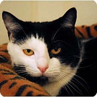 Adopt A Pet :: Rail Road #2 - Lunenburg, MA