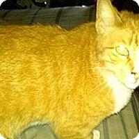 Adopt A Pet :: Sunny - Norwich, NY