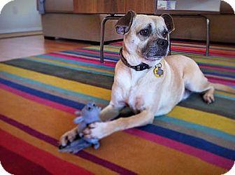 Pug Mix Dog for adoption in Austin, Texas - Rigby