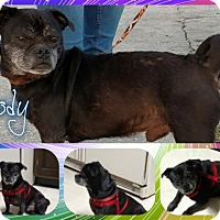 Adopt A Pet :: Cody - Walled Lake, MI