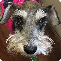 Adopt A Pet :: Daphne Girl~~ADOPTION PENDING - Sharonville, OH