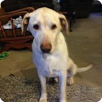 Adopt A Pet :: Trips - Carmichael, CA