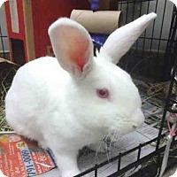 Adopt A Pet :: MIKIE - Raleigh, NC