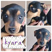 Adopt A Pet :: Kyala - LAKEWOOD, CA