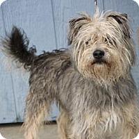 Adopt A Pet :: Picket - Yucaipa, CA