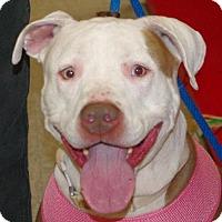 Adopt A Pet :: Tinkerbell - Longview, WA