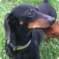 Adopt A Pet :: Lexi San Lucas - Houston, TX