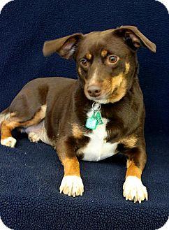Border Collie Mix Dog for adoption in Wichita, Kansas - Keeley