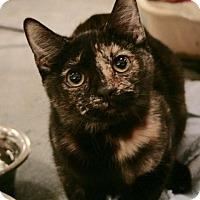Adopt A Pet :: Cee Cee - Sacramento, CA