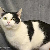 Adopt A Pet :: Annalyn - Neenah, WI