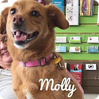Adopt A Pet :: Molly - Minneapolis, MN