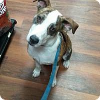Adopt A Pet :: Saxon - Ashville, OH