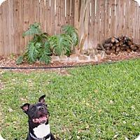 Adopt A Pet :: Lad - Bandera, TX