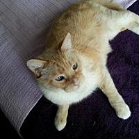 Adopt A Pet :: Dandelion - Knoxville, TN