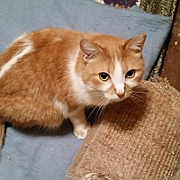 Adopt A Pet :: Rookie - Sharon Center, OH