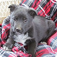 Adopt A Pet :: BARKLEY - Humboldt, TN