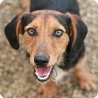 Adopt A Pet :: Dylan - Canoga Park, CA
