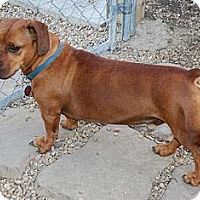 Adopt A Pet :: Milo - Virginia Beach, VA