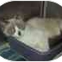 Adopt A Pet :: Monty - Keizer, OR
